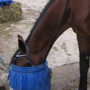 Конь в бочке