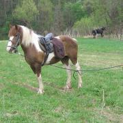 Там ... моя ... конюшня