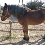 Melanouri horse farm. Минос (Бурушка)