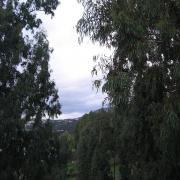 Гергиополис. Вид с балкона на эвкалиптовую аллею.