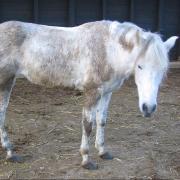 Прокат лошадей Зорайда (Zoraida horse riding). Erota
