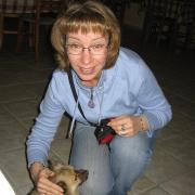 Крит. Собака ресторанная