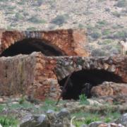 Критские козлы на развалинах
