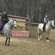 КСК Орлово. Кто из лошадей андалузский конь?